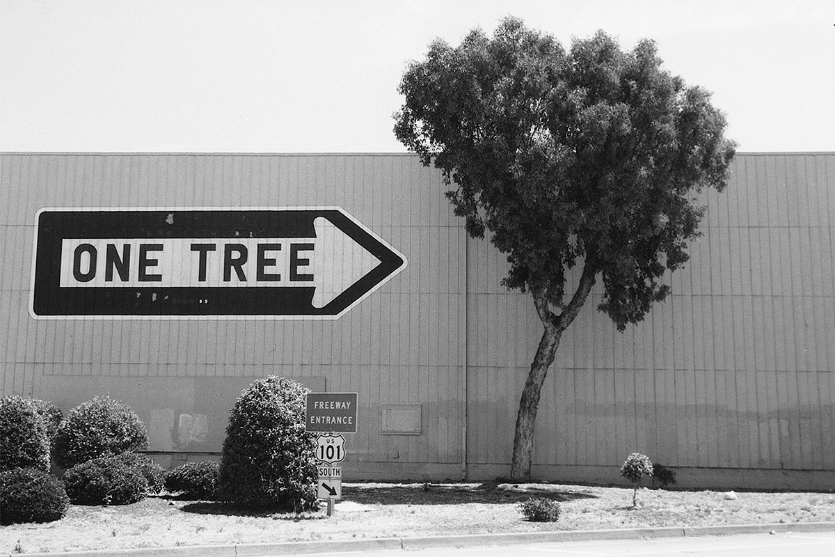 One Tree, San Francisco, USA, 2001. Photograph by David Rowley